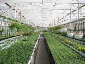 阳光板智能温室建造