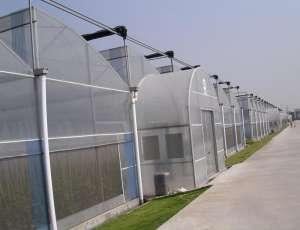 蔬菜温室大棚叶面肥如